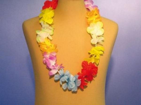 Hawaiian chain...Bloom 5 cm